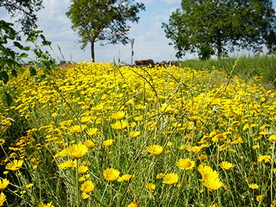 Blumenland4-Ritter-Saatgut