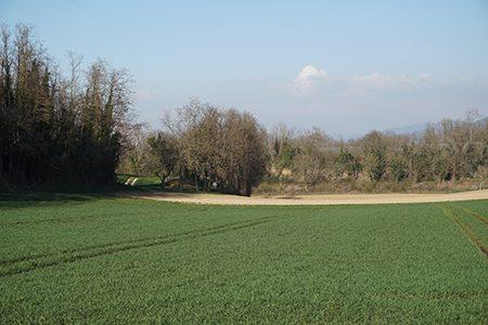 Feld-Ritter-Saatgut