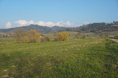 Jungpflanze3-Ritter-Saatgut